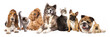 Group of dogs and cat different breeds, cat and dog