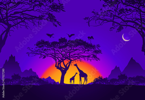 Cadres-photo bureau Violet African sunset