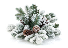 Fir Tree Branch With Cones Covered With Snow