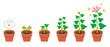 Leinwandbild Motiv 植物 育生 生長