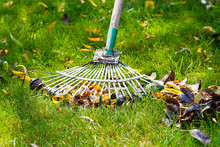 Cleaning Green Lawn From Fallen Leaves
