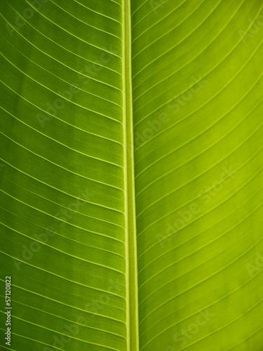Foto  Foglia verde ravvicinata