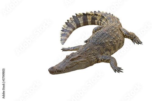 Poster Crocodile crocodile