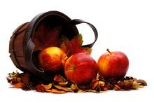 Harvest Basket With Spilling Apples