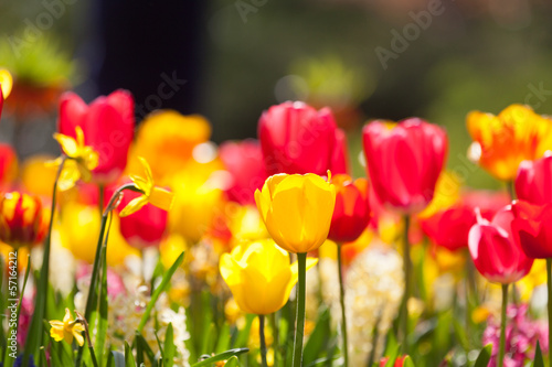 Fototapety, obrazy: Arrangement of multi colored flowers