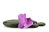 Fototapeta Kamienie - Storczyk z kamieniami do spa na białym tle