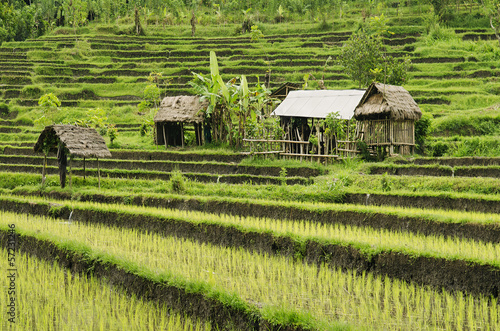 Foto op Plexiglas Indonesië rice fields in bali indonesia