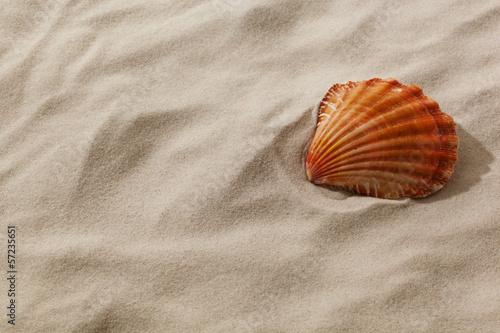 Fotografie, Obraz  Muschel an einem Sandstrand