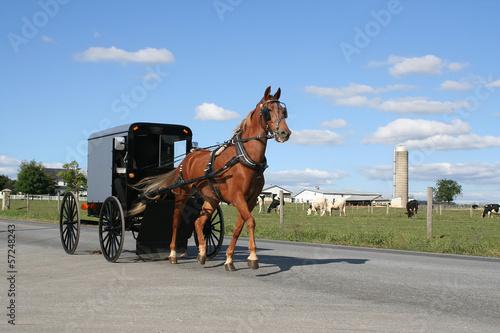 Fotografía An Amish Horse Drawn Carriage