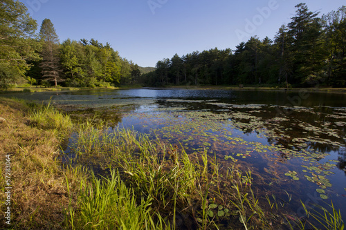 Fotografie, Obraz  Pond at Wild Acres Park in Pittsfield, Massachusetts