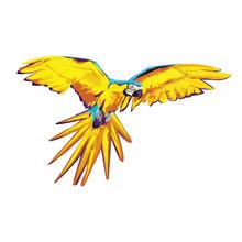 Beautiful Colour Vector Parrot
