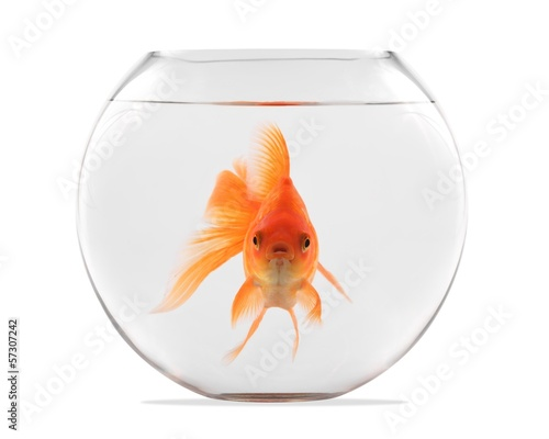 Tablou Canvas Goldfish floating in glass sphere and on a white background