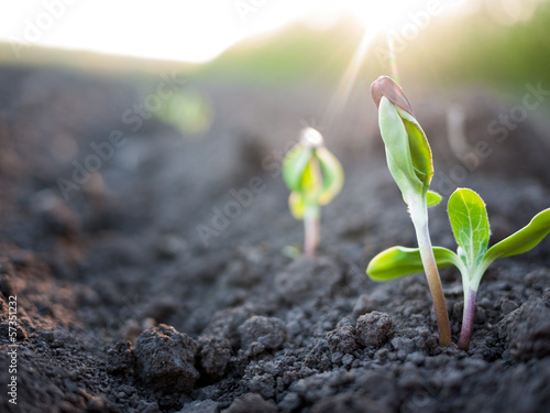 Foto op Canvas Planten green plants