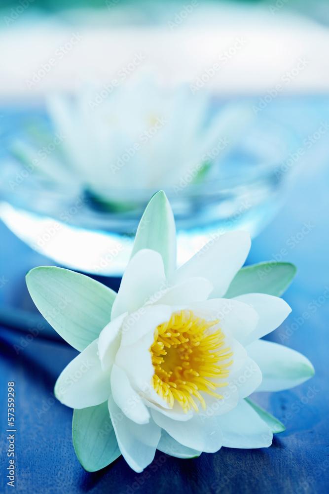 White Lotus Flower Foto Poster Wandbilder Bei Europosters