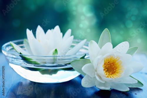 Foto op Canvas Lotusbloem white lotus flower
