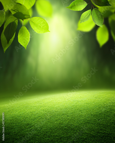 Spring forest  background - 57381095