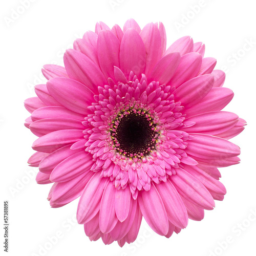 Deurstickers Gerbera Gerbera flower isolated on white background