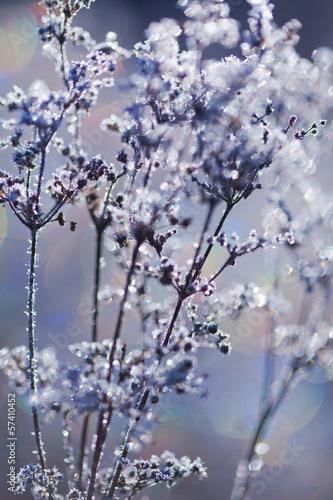 mrozone-rosliny