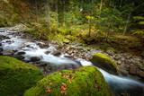 Dziki potok w górskim lesie