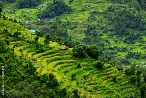 Staande foto Nepal Terraced rice fields. Himalayas, Nepal