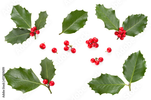 Holly leaves and berries Canvas Print
