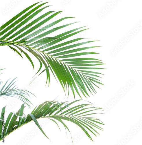 liscie-palmowe