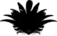 Bird Feather Fan Silhouette On White