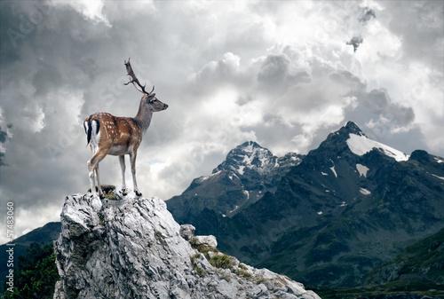 Foto auf AluDibond Hirsch Lonely Deer
