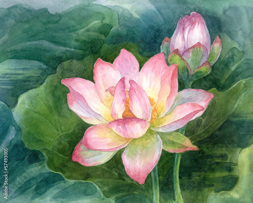 Lotus, akwarela.