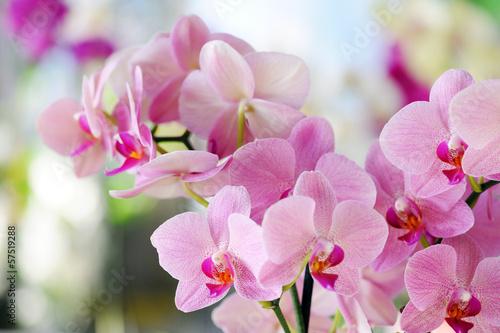 Obraz Różowa orchidea - fototapety do salonu