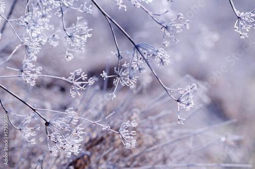 zimowe-tlo-kwiatowy