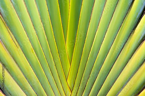 zielony-lisc-tekstury
