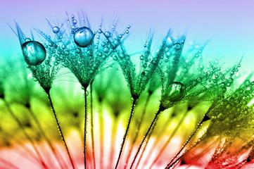 Obraz na Szkledewy dandelion