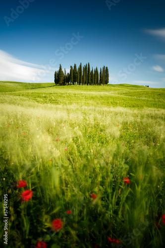 Canvas-taulu Toscane, Italie