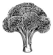 Vintage Retro Woodcut Broccoli