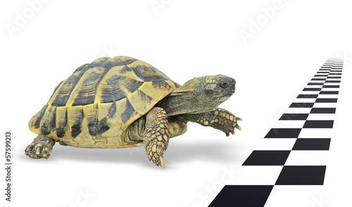Deurstickers Schildpad Mit Ausdauer das Ziel erreichen