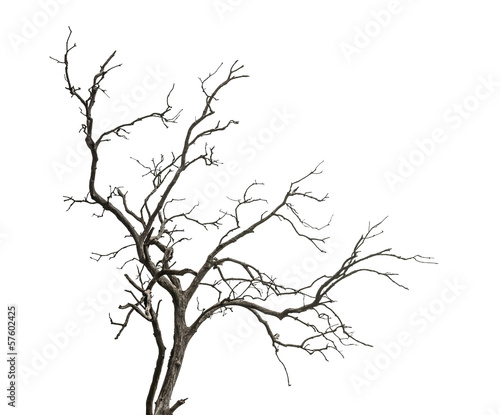 Fotografia Dead tree isolated on white background