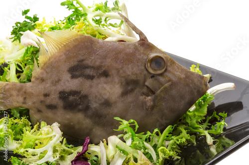Photo  Fish Pesce San Pietro