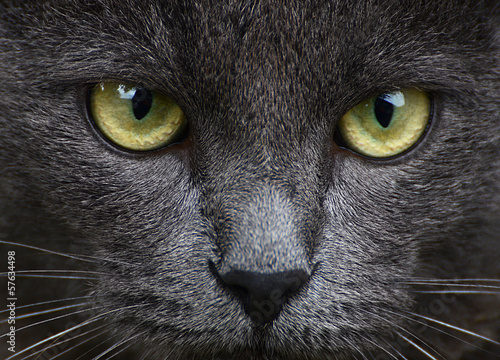 Close up portrait of grey kitten
