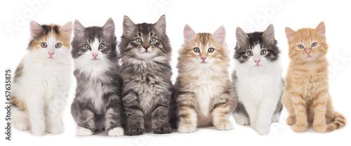 Photographie  Sechs Kätzchen nebeneinander , Katzengruppe