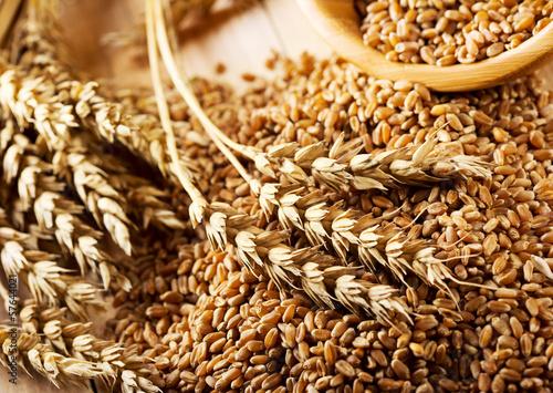Obraz wheat grains - fototapety do salonu