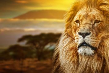 FototapetaLion portrait on savanna background and Mount Kilimanjaro