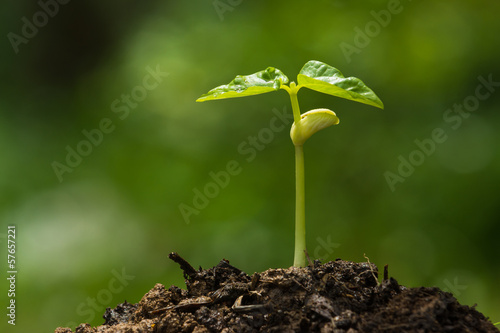 Foto Green sprout growing from seed
