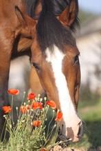 Pferdesenior