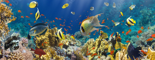 Coral and fish - 57728801