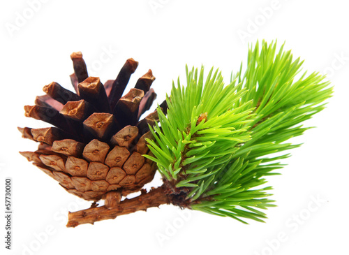 Fotografie, Obraz  Pine tree branch with cone isolated on white.
