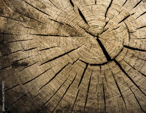 Obraz Struktura drewna. Tło - fototapety do salonu