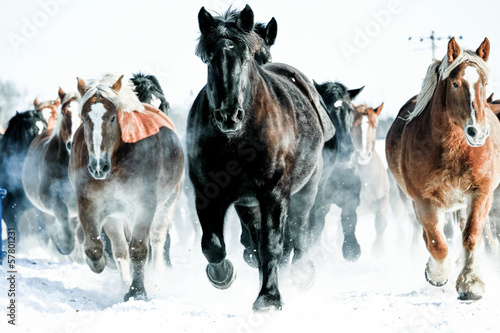 Fototapeta 馬の集団 obraz
