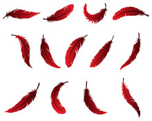 Beautiful Feather Design For Logo