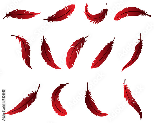 Photo  Beautiful Feather Design for Logo